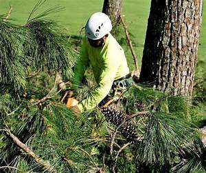 tree removal service louisville ky
